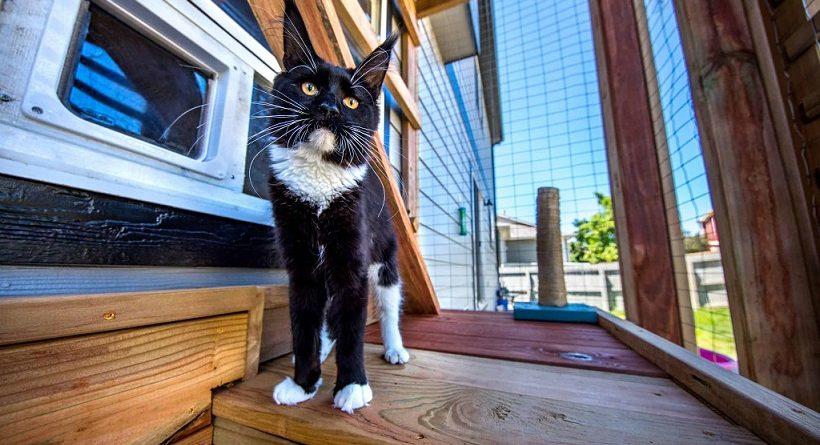如何提高貓貓的抵抗能力,降低得病