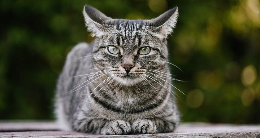 貓貓糖尿病腎病注意事項