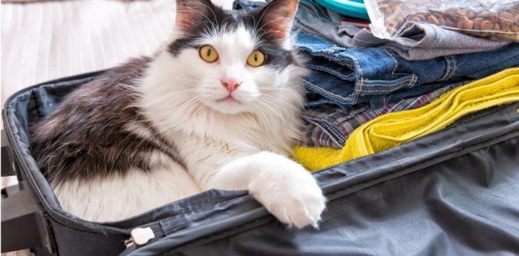 小寵物的生活論壇&小寵物香港移民攻略大全